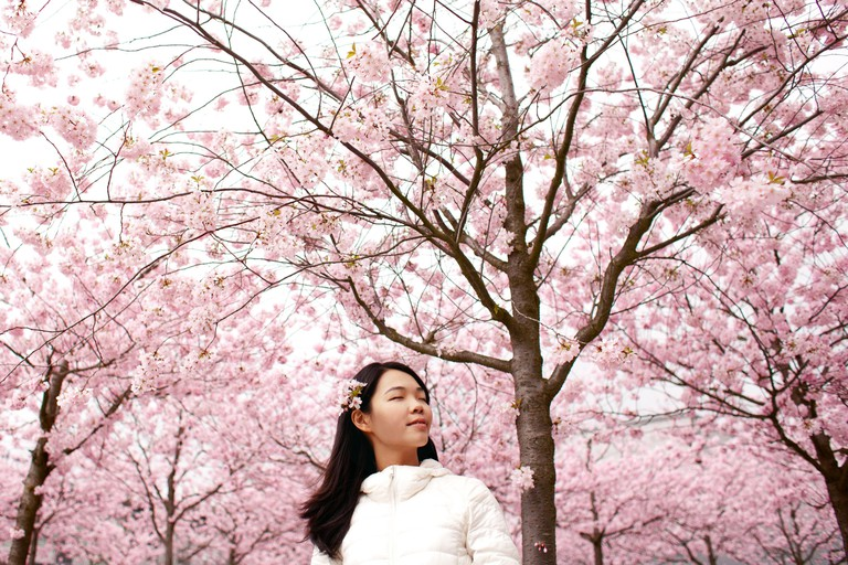 Taking in the beauty of Korean spring