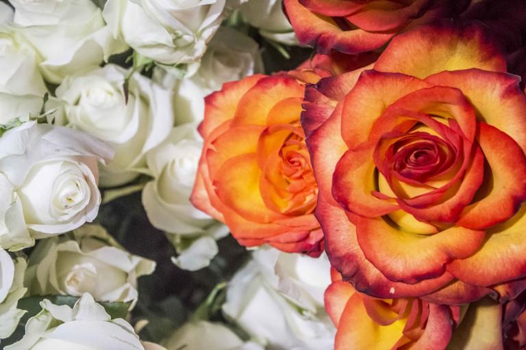 Gramercy Flowers VDAY 027