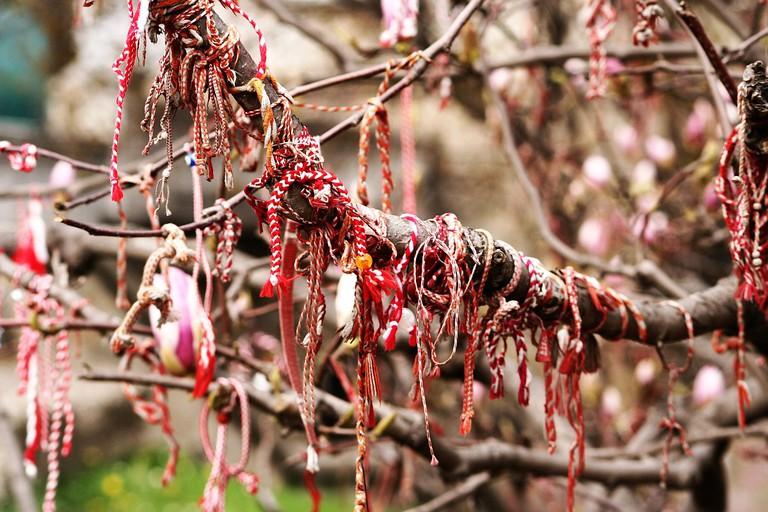 Martenitsas on a magnolia tree