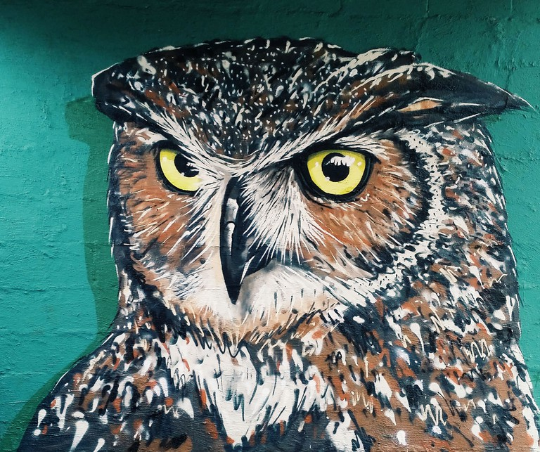 An owl on SPCA's wall in Durban