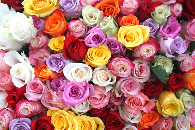 Roses at the Marché d'Aligre │© ParisSharing / Flickr