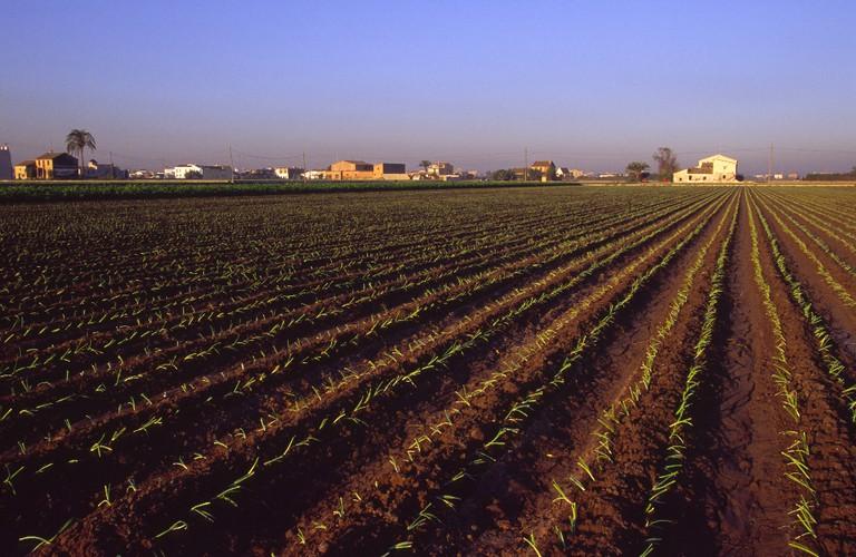 The Valencian countryside