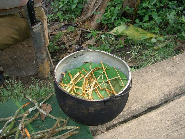 Ayahuasca tea |© Terpsichore/WikiCommons