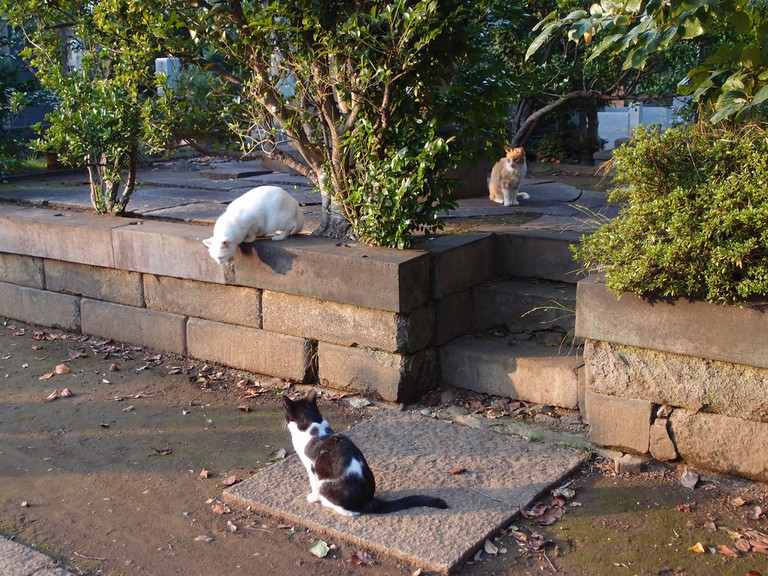 Resident cats hanging out at Yanaka Cemetery | © Guilhem Vellut/Flickr