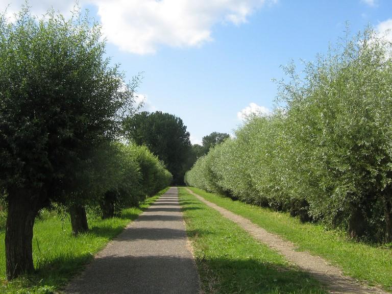 A tree lined path in Amserdamse Bos