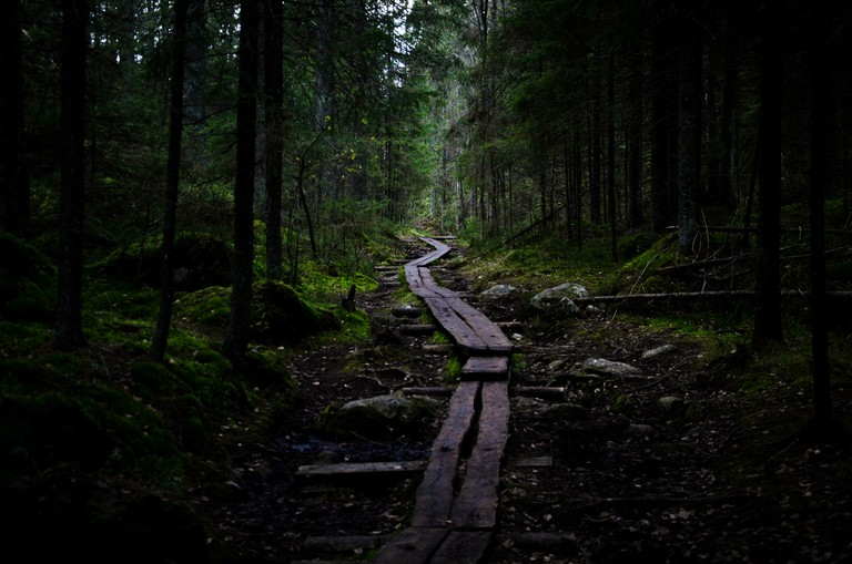 A forest trail in Nuuksio National Park
