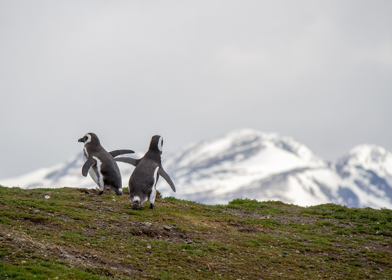 Penguin Island in Beagle Channel