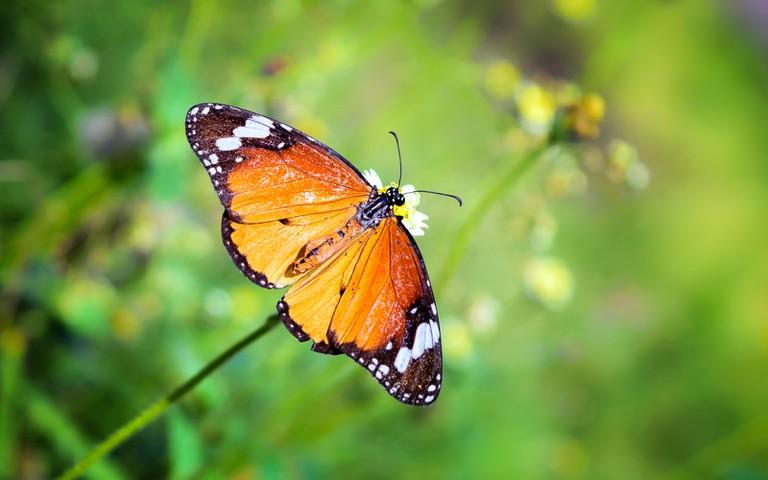 Alex Monroe's work is inspired by butterflies