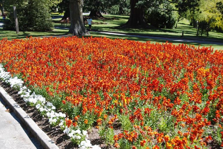 Earnslaw Park Flower Bed