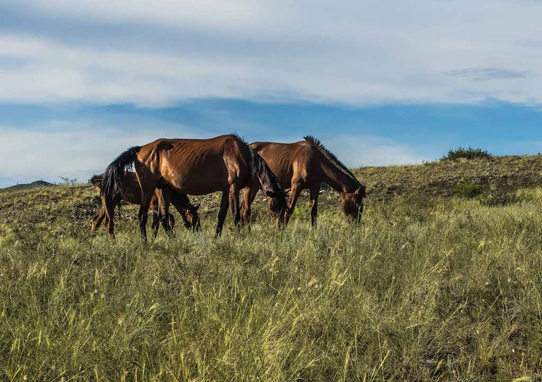 Wild horses of Tyva Photo by Joan Díaz Gallamí
