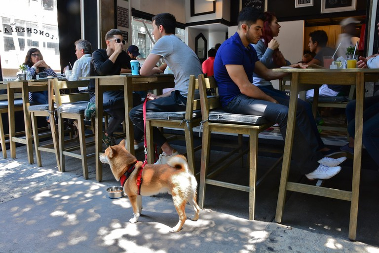 How could you not love a place with shiba inu sighting potential?