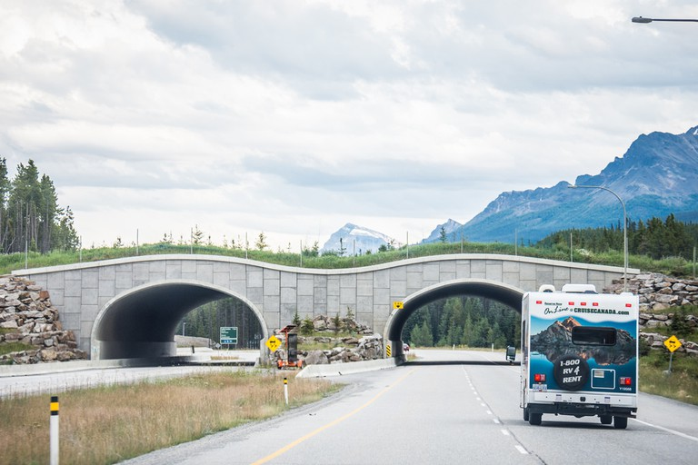 Animal crossing in Banff National Park