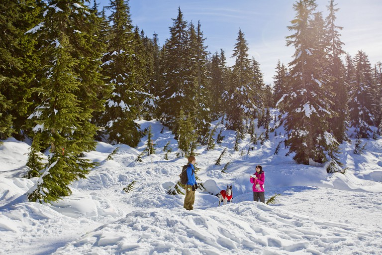 Exploring Mount Seymour | © GoToVan / Flickr