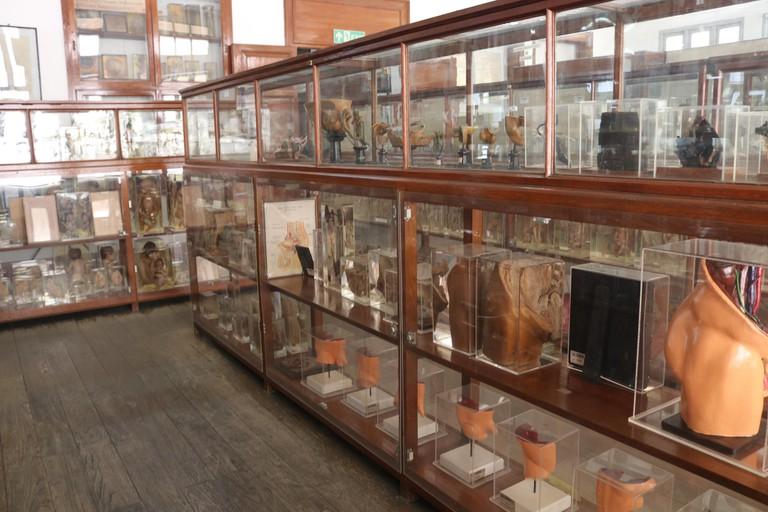 Congdon Anatomical Museum