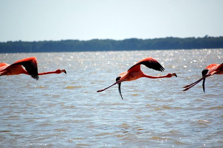 Celestún's famous flamingos