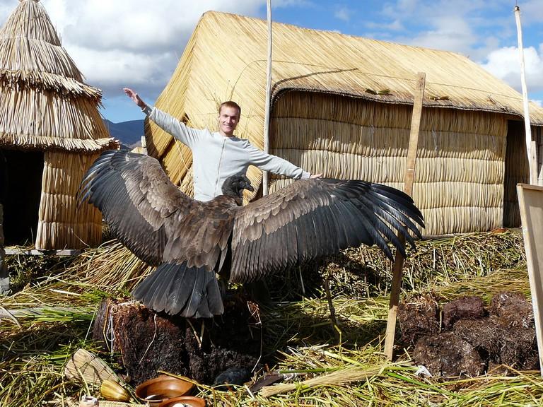A tourist measures a condor's wingspan.