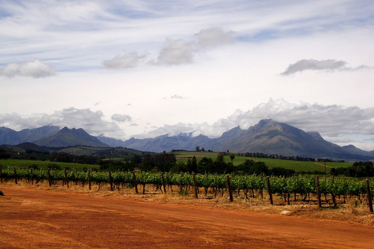 View of the Stellenbosch mountains from a wine estate