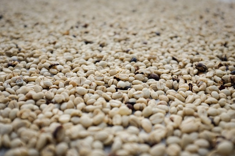 Learn about coffee production