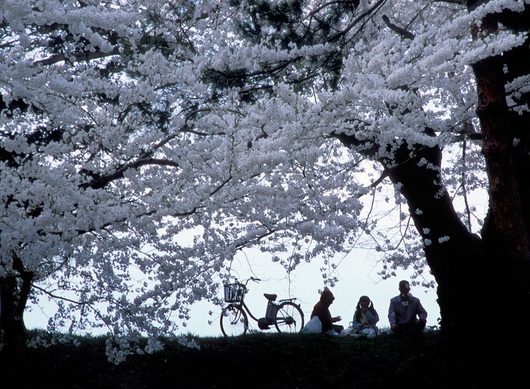 Hanami and a picnic under the flowering trees | © C.K. Tse/Flickr