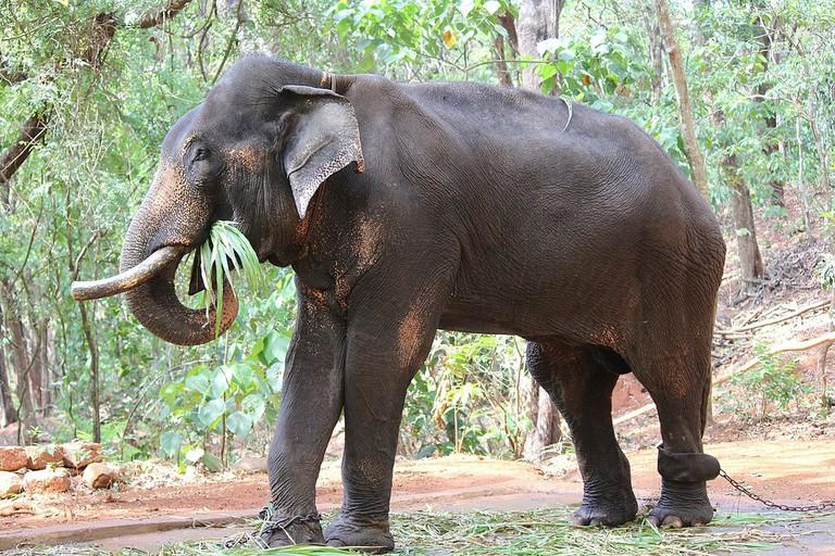 Bondla Wildlife Sanctuary | © Amolpro / Wikimedia Commons