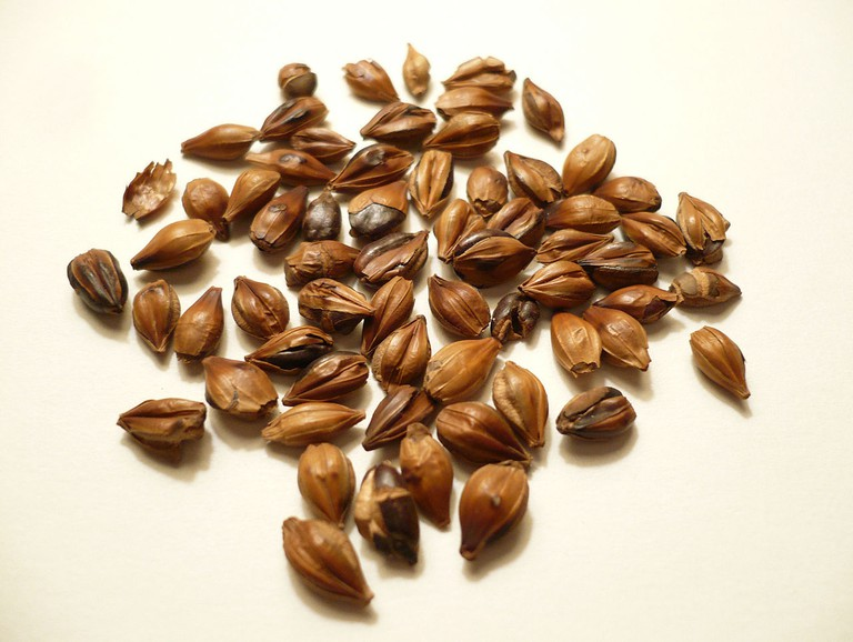 Grains of boricha, a Korean tisane made by boiling toasted barley