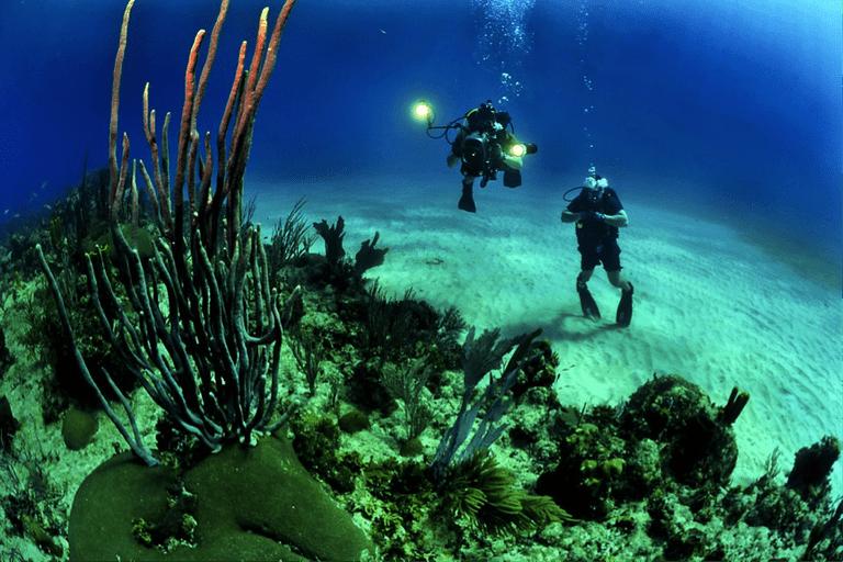 Scuba Divers visiting a coral reef