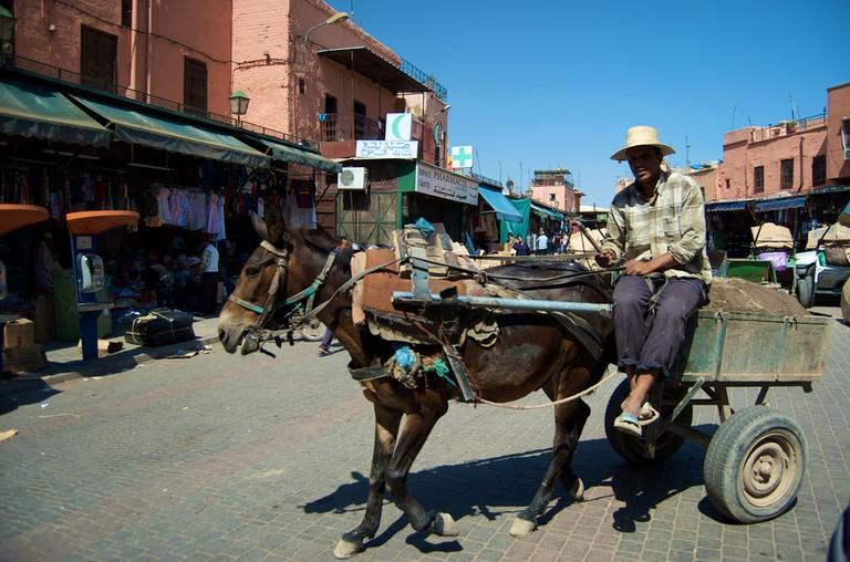 Marrakesh Donkey