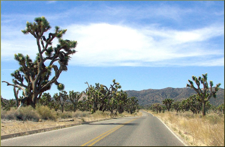Driving through Joshua Tree | © Don Graham / Flickr
