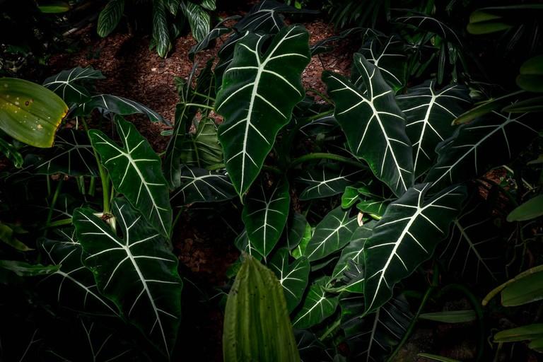 Cool, lush leaves