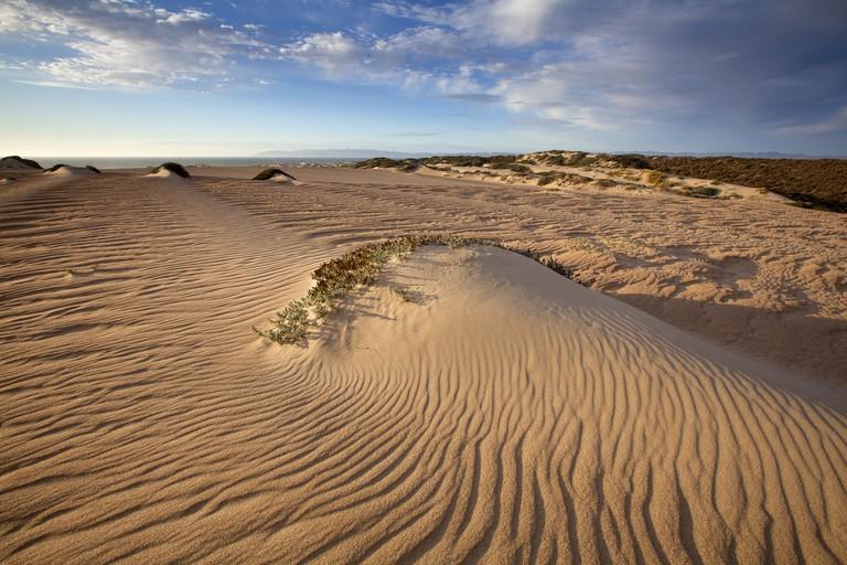 Guadalupe-Nipomo Dunes National Wildlife Refuge, Guadalupe, California