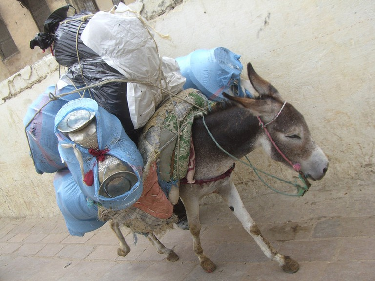 Donkey carrying goods in Morocco