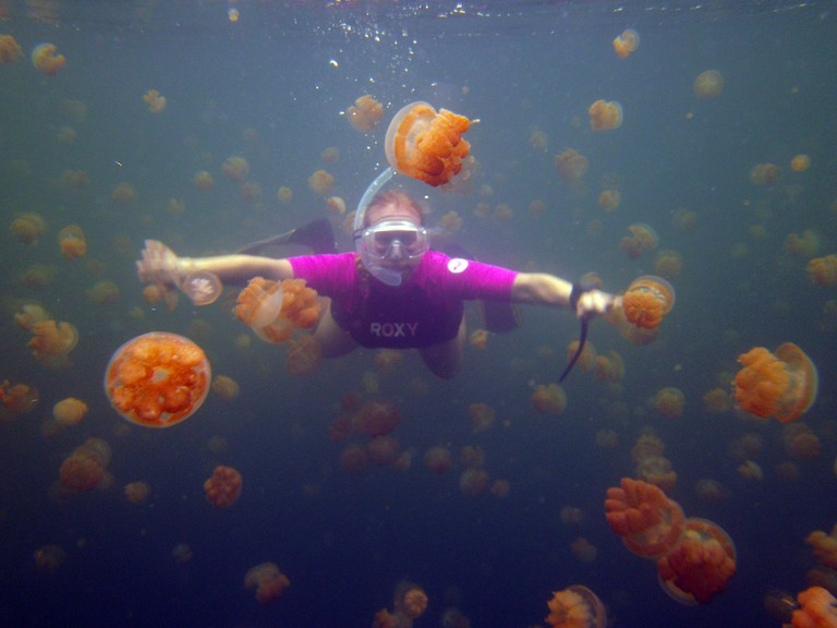 A snorkeler swims with golden jellyfish, Palau
