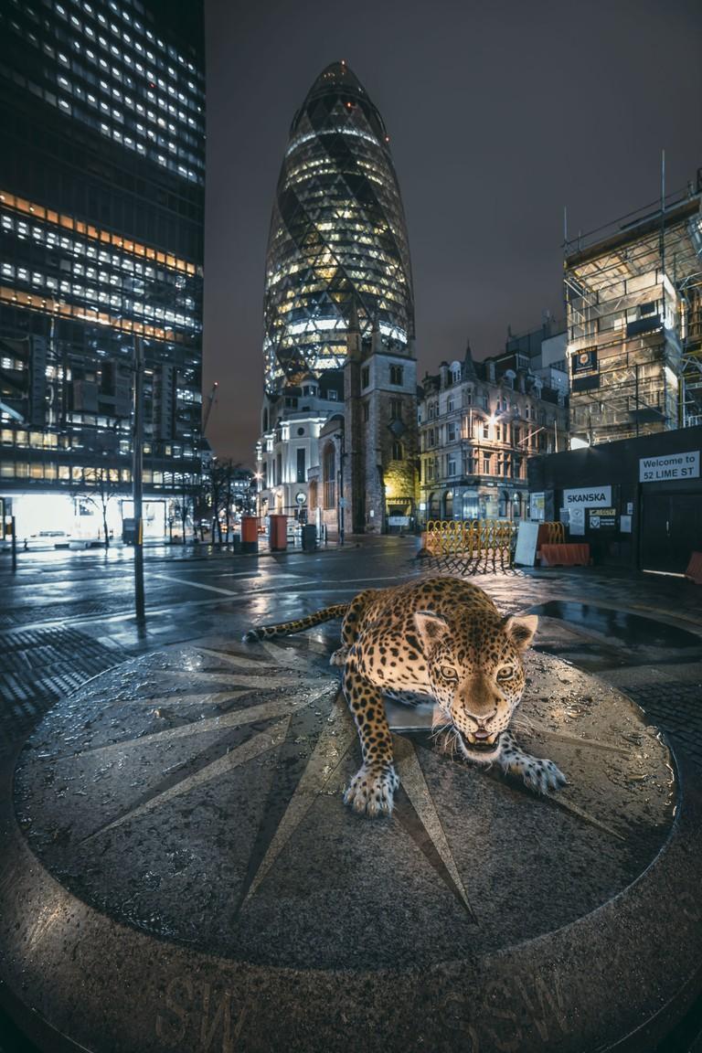 The leopard in London