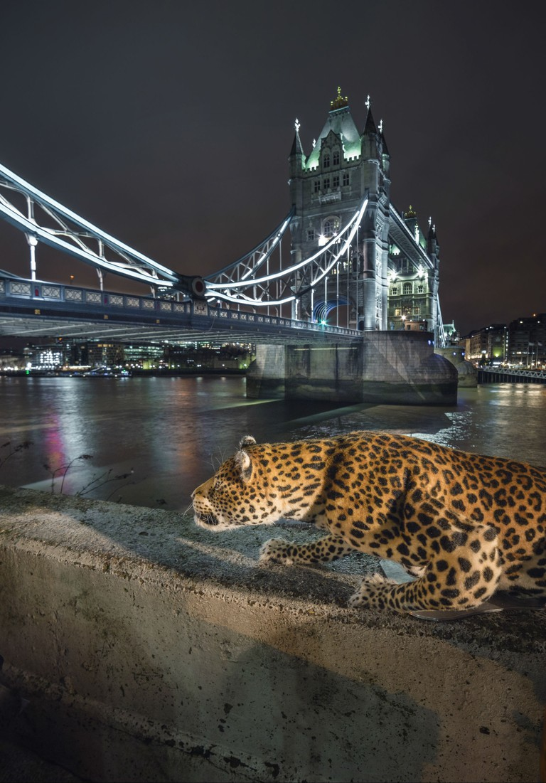 A total of 90% of the natural habitat of leopards has been destroyed