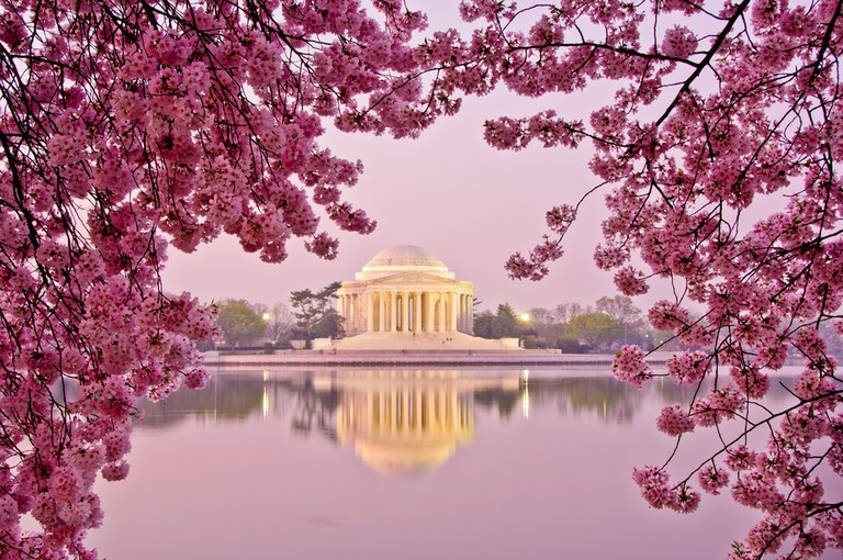 The Cherry Blossom Festival started in 1927