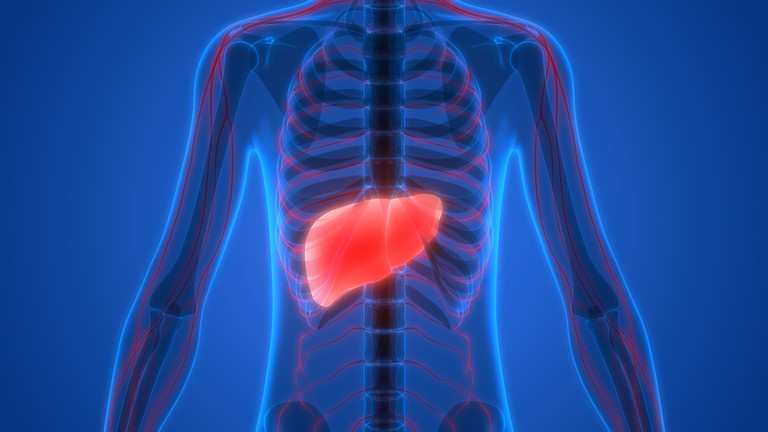The liver | Shutterstock