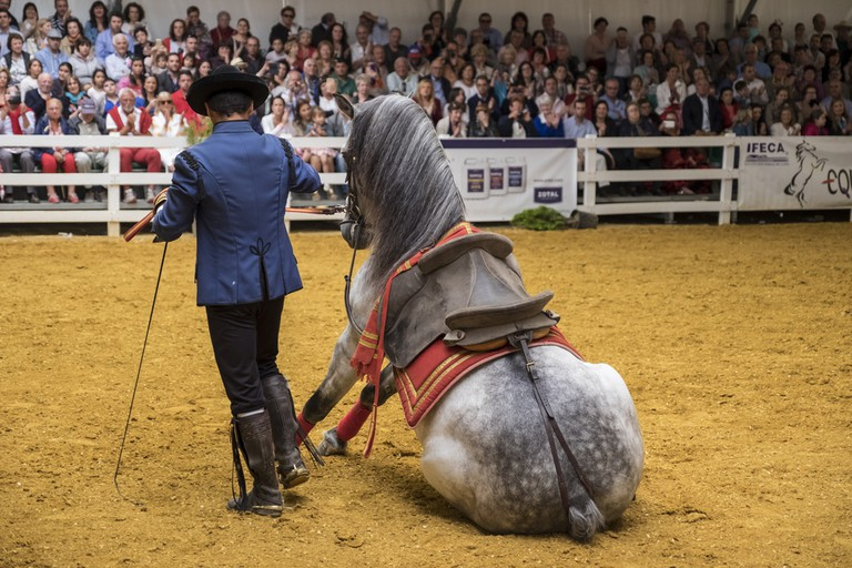 Amazing feats of horsemanship are to be seen in Jerez's equestrian ballets
