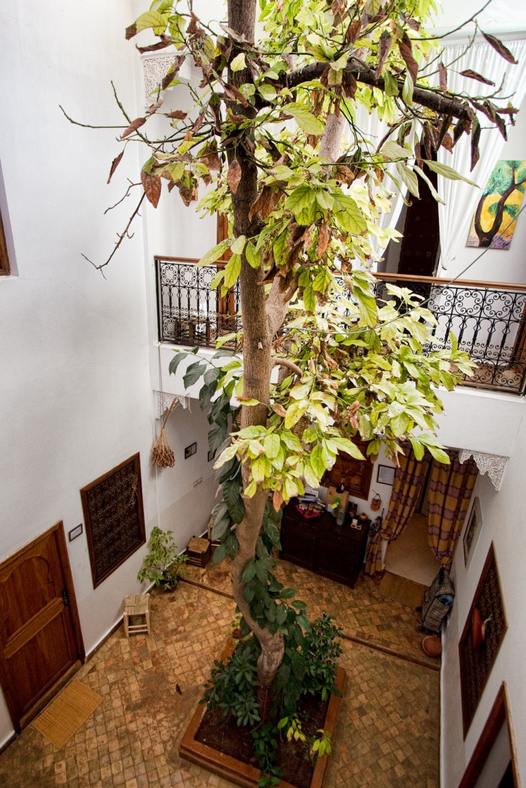 Riad tree