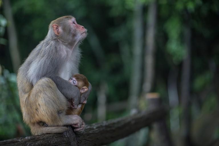 Monkeys on Tianmen Mountain