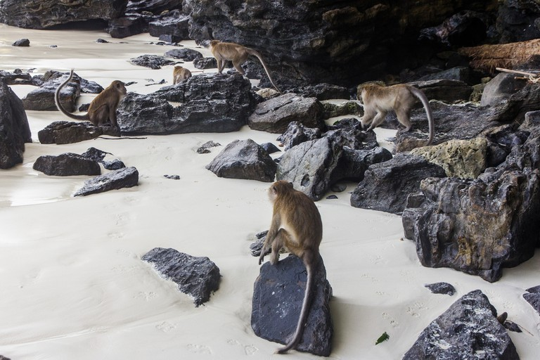 Monkey Beach at Phi Phi Don Island