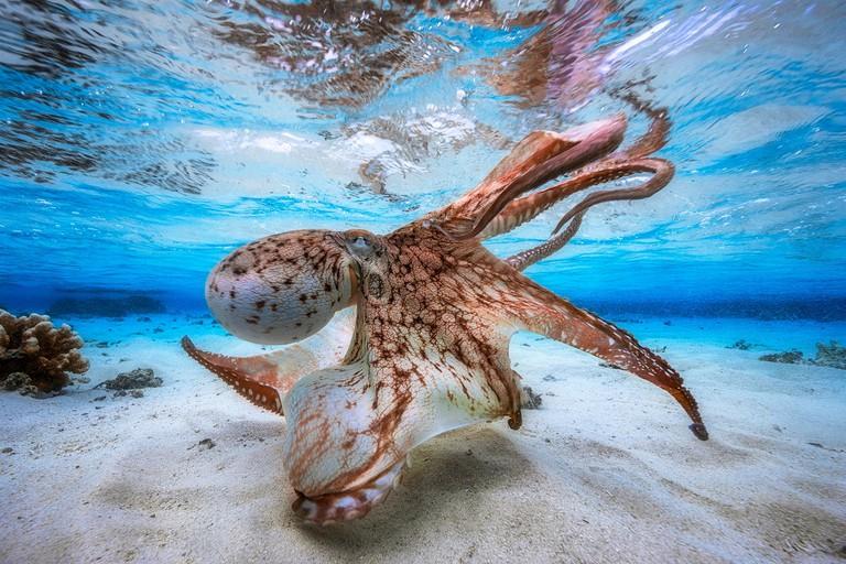La danse du poulpe 'Dancing Octopus' © Gabriel Barathieu / Courtesy of Chavonnes Battery Museum