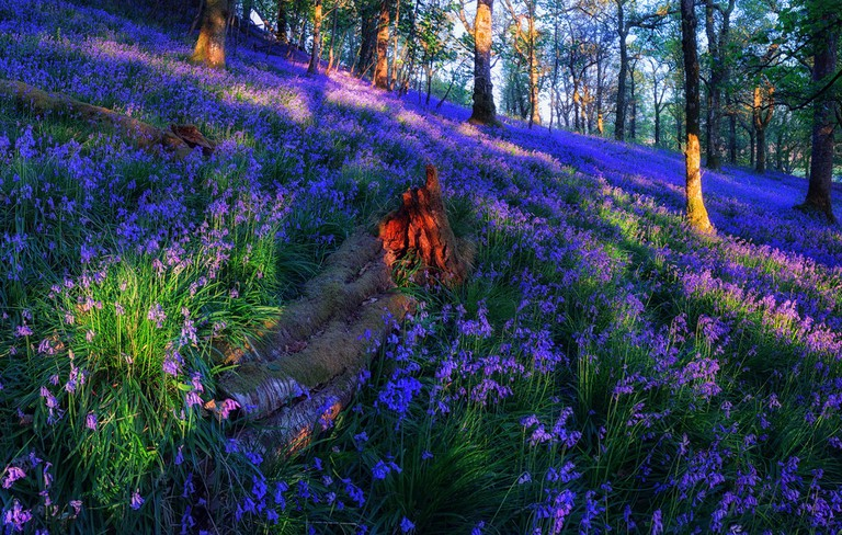 The Fallen. Spring In The Woodlands Of The Trossachs | © John mcsporran/Flickr