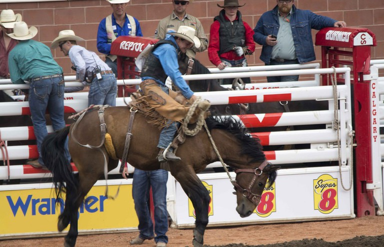 Calgary Stampede action