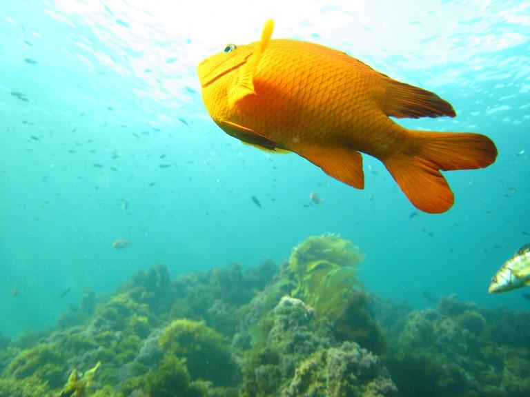 Fish swimming upwards