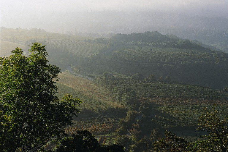 Vienna Woods: Kahlenberg
