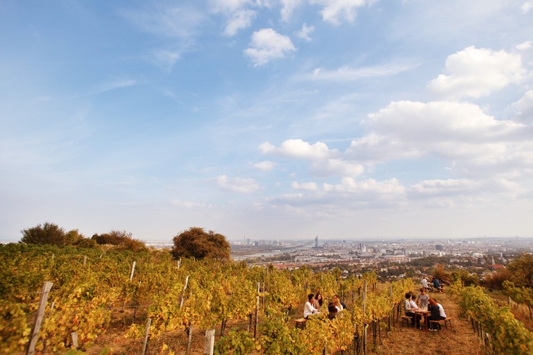 Wieninger vineyard on the Nussberg