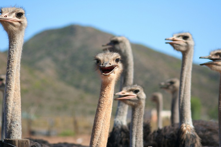 Ostrich Farm © Michael Day / Flickr