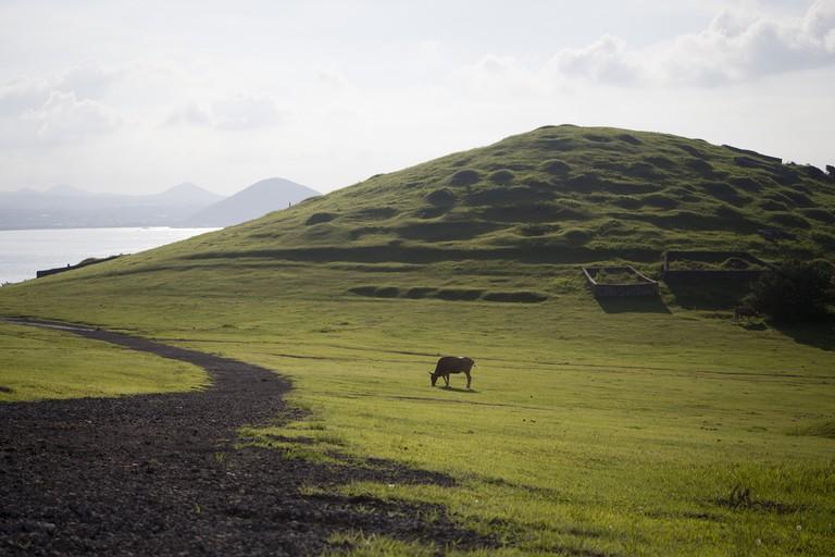 A horse runs free on Udo Island