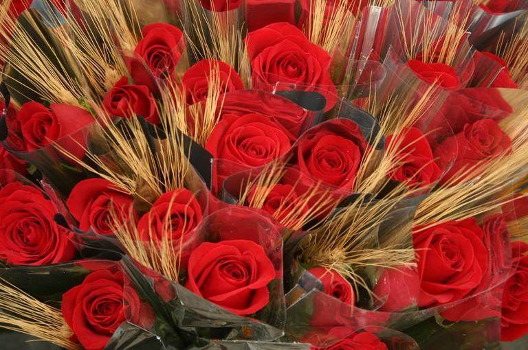 Roses for Saint Jordi's day © Ajuntament d'Esplugues de Llobregat