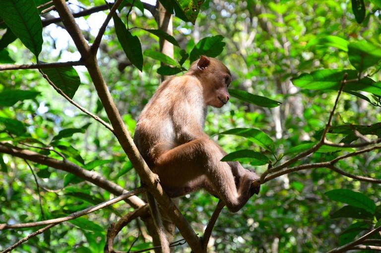 Monkey in Erawan national park, Thailand